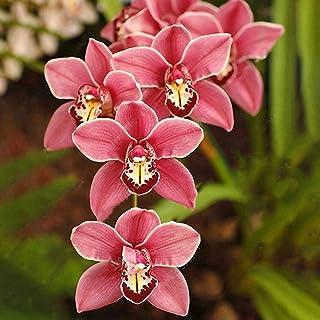 Funnyrunstore 100Pcs / Pack Orquídeas para Barcos Mini