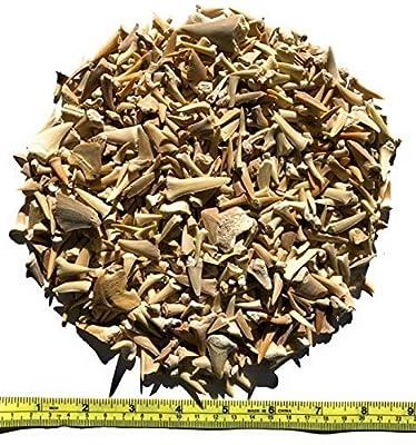 Kolt Mining Bulk Real Fossilized Shark Teeth (One Pound)