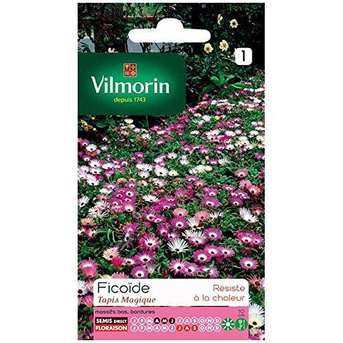 Vilmorin - Ficoïde Tapis magique