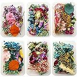 Decoración de flores secas, flores prensadas naturales, colección de decoraciones florales para hacer manualidades y velas de resina epoxi, flores secas mezcladas, en caja, 1 unidad