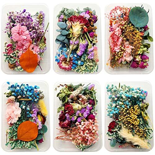 Decoración de flores secas, flores prensadas naturales, colección de decoraciones florales para hacer manualidades y velas...