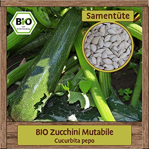 BIO Zucchini Samen Sorte Mutabile (Cucurbita pepo) Gemüsesamen Zucchini Saatgut