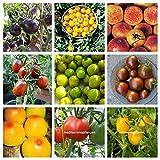 potseed storici semi ungherese pomodoro, 20 varietà, diversa imballato, della nostra azienda agricola, non ogm, 200 semi