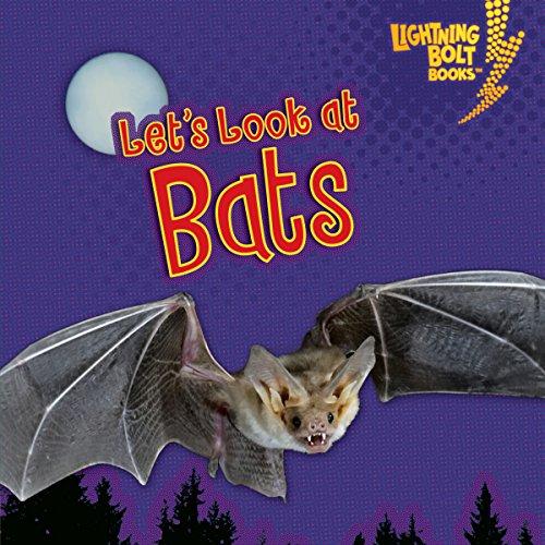 Let's Look at Bats copertina