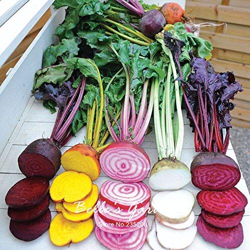100pcs Multi-couleurs de betterave Graines Hardy plantes exotiques Semences potagères Graines de Bonsai végétales ornementales