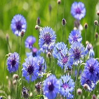 Outsidepride Cornflower Wildflower Seed - 1 LB