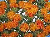 100 semi di cartamo, Carthamus tinctorius, di Dyer Zafferano (Hong-Hua) Organico
