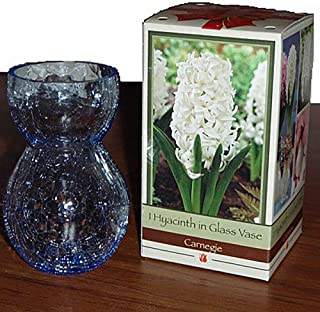 bulb growing vase