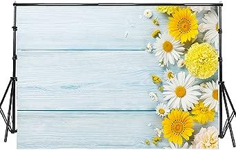 daisy flower photography