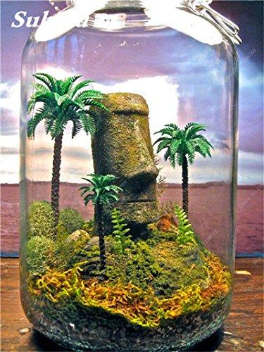 Vert mousse Graines 120 Pcs exotiques rares Graines Bonsai Moss Belle Moss Boule décorative Jardin créatif herbe Graines Plante en pot 13