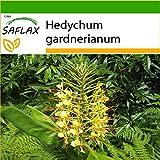saflax - giglio dello zenzero - 10 semi - con substrato - hedychum gardnerianum