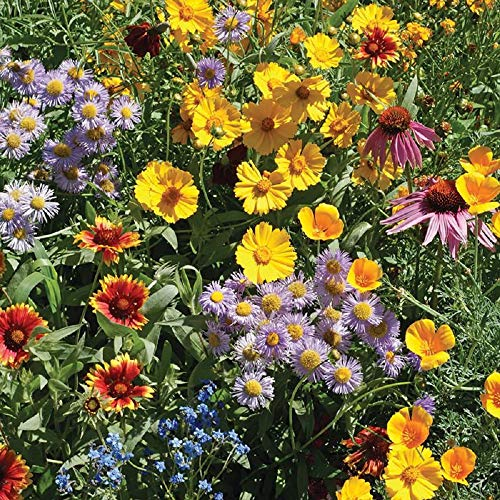 Bee Feed Wildflower Mix Non-GMO Seeds, Bulk Pack of 50,000+ Seeds - by Seeds2Go