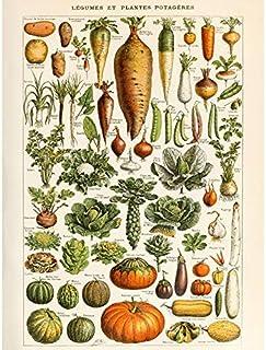 Millot Encyclopedia Page Vegetables Legumes Art Print Canvas Premium Wall Decor Poster Mural Mur Déco Affiche