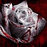 120PCS Seed Rarest White Blood Rose Plant Flower Seeds Flower Garden Asaka Rare True Blood Rose seed
