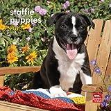 Staffordshire Bull Terrier Puppies 2013 Calendar