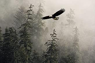 soaring eagle alaska