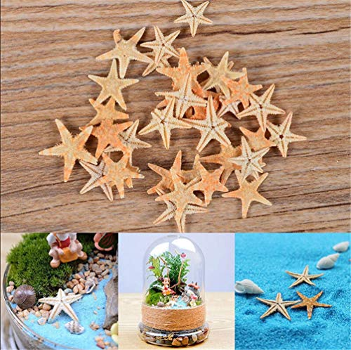 Small Natural Starfish Small Sea Star for DIY Making Ornament for Wedding Decor Craft
