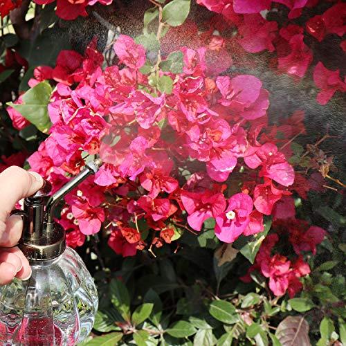 TOSSOW霧吹きガラス植物園芸霧吹きアンティーク調インテリア霧吹きおしゃれじょうろ観葉植物掃除散水240mlカボチャ型(透明)