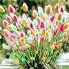 100pcs Rabbit Tail Grass Seeds Mixed Color Garden Bunny Tail Grass Decor Plants #1