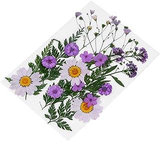 Artibetter 22 Pcs Violet Fleurs Séchées Artisanat Fleurs Pressées à La Main Spécimen Décoratif Vraie Fleur Sèche pour Scra...