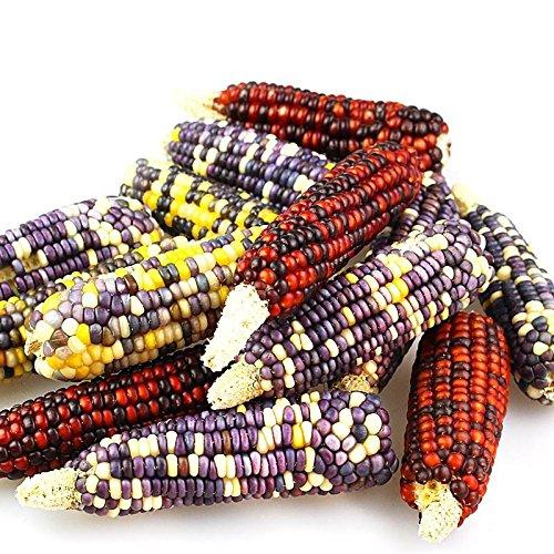 20pcs graines de maïs violet noir japonais arc-en-rare graines de légumes exotiques maison en pot bonsaï cerise et jardin Livraison gratuite 3