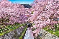 1000ピース ジグソーパズル めざせ! パズルの達人 桜咲く琵琶湖疎水―滋賀(50x75cm)