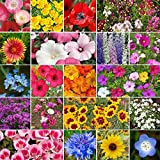 All Annual Wildflower Seed Mix- 1 Pound