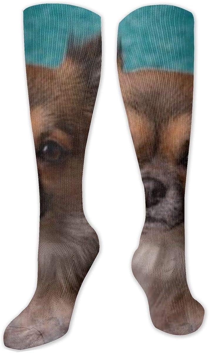 Doberman Pinscher Knee High Socks Leg Warmer Dresses Long Boot Stockings For Womens Cosplay Daily Wear