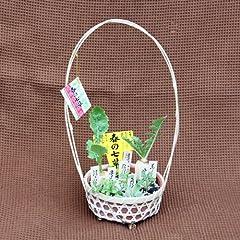 春の七草セット 花鉢
