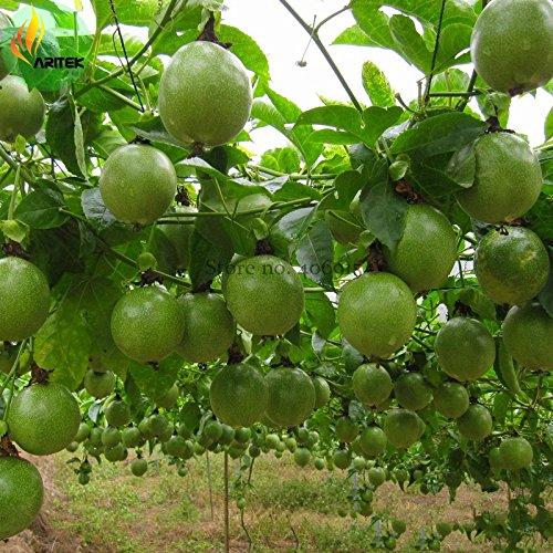 Pinkdose2018 Vente chaude nouvelle Passiflora Edulis Passion Fruit Graines, 30 graines, Pack professionnel, Comestible Savoureux Juicy Fruit E3510