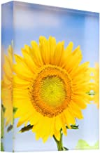 Flowering Sunflower in Summer Morning Sun Acrylic Block Photo Print Carl Chapman 3444 (30x20x3cm (12x8x1.2in))