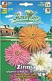 Hortus 60SDFZ044 Fiorevivo Zinnia Gigante a Fior di Cactus, Mix, 13x0.2x20 cm
