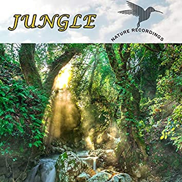 Jungle (Nature Recordings)