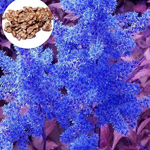 Yukio Samenhaus - 100 Stück Selten Blau Gemeiner Tannenwedel (Hippuris vulgaris) Samen Sumpf- und Wasserpflanzen winterhart an Ufern und Wasserrändern