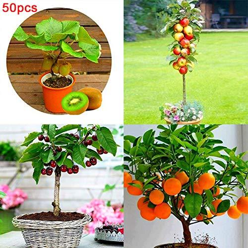 10x Hochwertige Frische Litschi Samen Seltene Köstliche Süße Saison Obstbaum