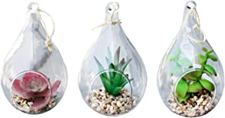 Best tillandsia plants in glass ornaments Reviews