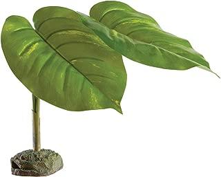 Best massive jade plant Reviews
