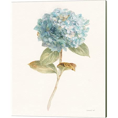 Watercolor painting of flowers fine art print of blossoming Sage