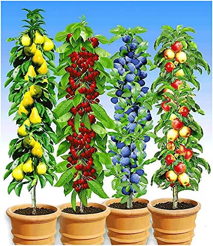 BALDUR Garten Säulen-Obst-Kollektion Bild