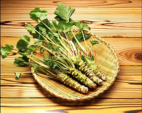 200 Stück Wasabi Samen, japanischen Meerrettich Samen Gemüsesamen Bonsai Pflanze DIY Hausgarten-Anlagen