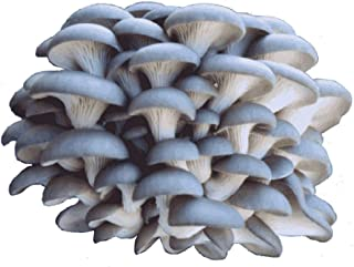 Organic Blue Oyster Mushroom Growing Kit