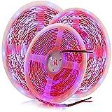 Wandskllss Planta LED crece tira luz Ip65 espectro completo SMD 5050 rojo azul 3:3 cuerda luz para acuario invernadero planta hidropónica no impermeable