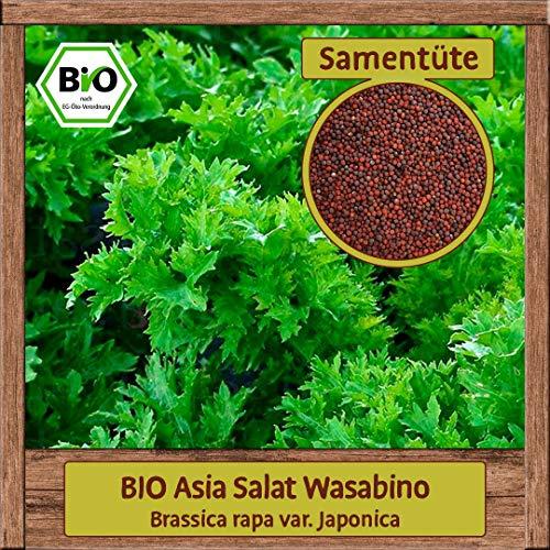 BIO Asia Salat Samen Asia Pflücksalat Wasabino (Brassica rapa) Gemüsesamen ganzjährig & winterhart