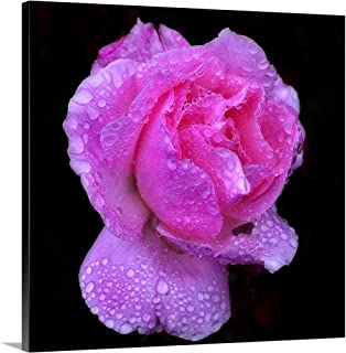 GREATBIGCANVAS Gallery-Wrapped Canvas Queen Elizabeth Rose After Heavy Rainfall. by 48