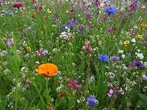Blumenwiese als Wildkräuter Mischung fünfjährige Bienenweide, insektenfreundlicher Garten mehrjährige winterharte Blühwiese für Bienen Hummeln und Schmetterlinge, Geschenk Geburtstag Einzug (25qm)