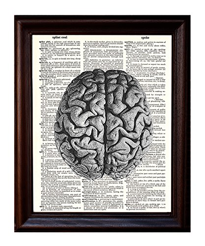 Anatomical Human Brain - Printed on Upcycled Vintage Dictionary Paper - 8x11 Anatomy Art Poster/Print