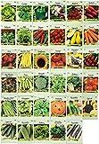 Set of 35 Assorted Vegetable & Herb Seeds 35 Varieties Create a Deluxe...