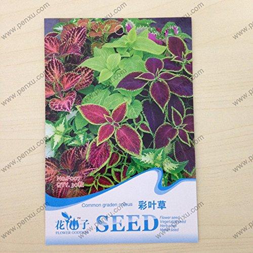 paquet de graines originales, des graines de plantes de chambre coleus graden communes, la floraison à maturité 60 jours, 30 particules de graines / sac