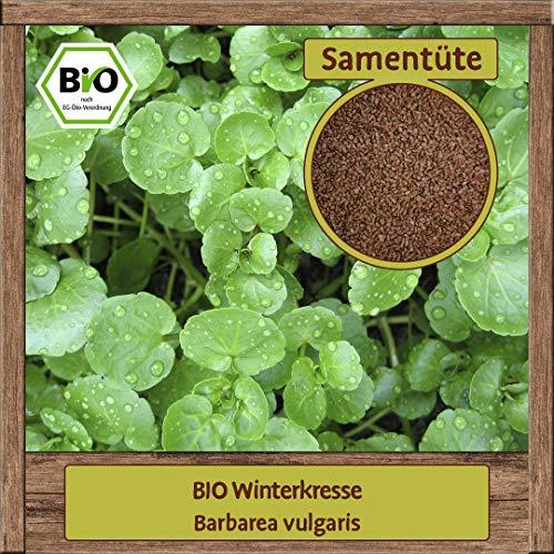 BIO Kresse Samen Sorte (Barbarea vulgaris) Kräutersamen Kresse Saatgut