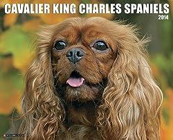 Cavalier King Charles Spaniels 2014 Calendar[Willow Creek Press][Amazon]